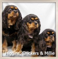 Miller, Snickers and